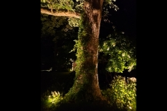 tree-accent-lighting-in-backyard
