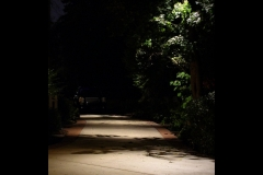 downlights-in-trees-over-driveway